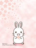 桜(うさぎ♀)待ち受け画像