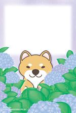 アジサイ(犬:柴)ポストカード