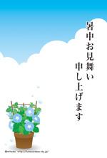 暑中見舞い・残暑見舞い04(朝顔)